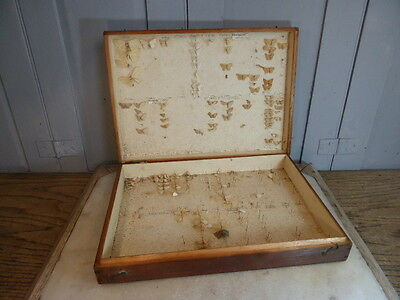 Antique Entomologist's butterfly moth display collection box & contents