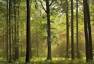 "Wall mural photo wallpaper GREEN FOREST SCENE ""AUTUMN FOREST"" wall covering"