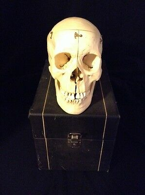 Vintage Kilgore Human Skull Model with Case - This is not a real skull.