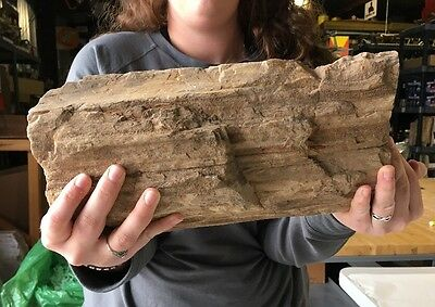 "Large Fossilized Petrified Tree Wood Log 31 Lbs 14"" Unique Rough Bark Texas"