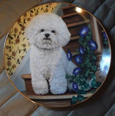 Bichon Frise Dog Collector Plate * Stepping Up * Danbury Mint Limited Edition
