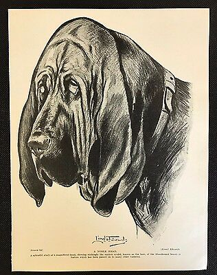 Original 1934 Dog Print / Bookplate - BLOODHOUND, A Noble Head, Lionel Edwards