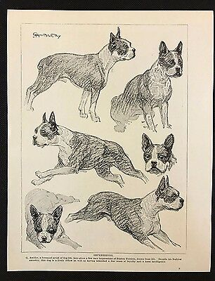 "Original 1934 Dog Print / Bookplate - BOSTON TERRIER, ""Impressions"" by G. Ambler"