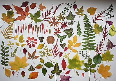 60 Mixed Real Pressed Leaves Flower Embellishments Card making Scrapbooking art