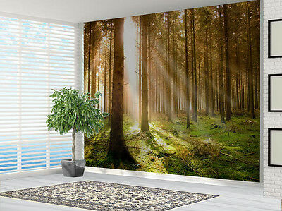 Forest at dawn woodland wallpaper photo wall mural (3801688) Forest
