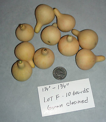 LOT OF 10 GREEN CLEANED SPINNER GOURDS - Great for Woodburning (Lot F)