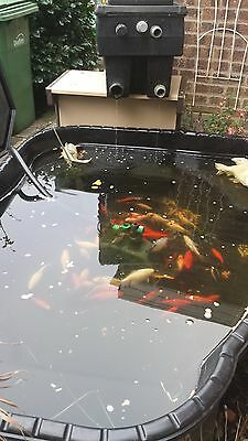 6 gold fish and pond and pump +filter box