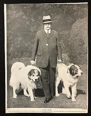 1934 Colour Dog Print / Bookplate - PYRENEAN MOUNTAIN DOGS, Sir Worsfold