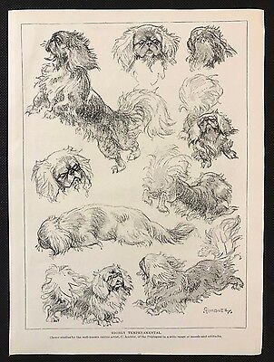 Original 1934 Dog Print / Bookplate - PEKINGESE, Sketched Studies by C. Ambler