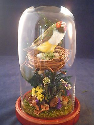 Sale*antique Victorian Inspired Taxidermy Gouldian Finch-Glass Dome/wood-Bird