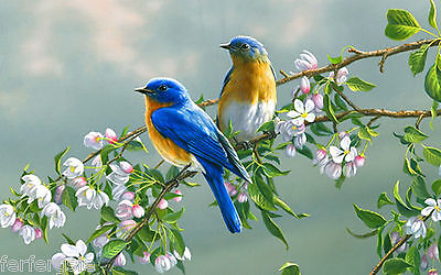 Image of two Bluebirds in tree