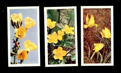 Rarer Brooke Bonds Tea Wild Flowers Series A Thin Cards QTY 3
