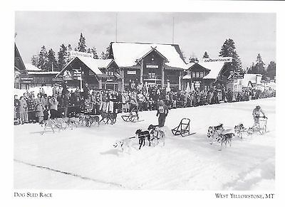 "*Postcard-""The Dog Sled Race"" /Mid 1950's/ *W Yellowstone MT (#273)"