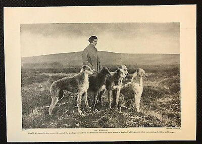 1934 Dog Print / Bookplate - DEERHOUNDS, Miss Richmond on Exmoor with her dogs