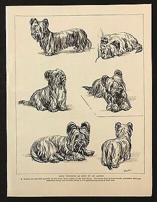1934 Dog Print / Bookplate - SKYE TERRIERS, Sketched by E. Watson