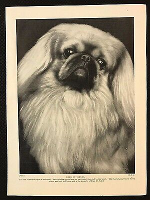 1934 Dog Print / Bookplate - PEKINGESE, Bred in Vienna, Owned by Frau Dr. Sekel