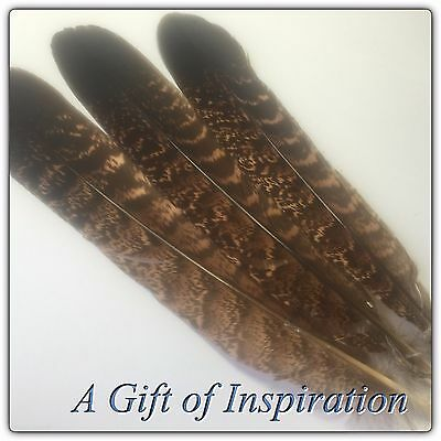 3 RARE Natural OWL Eagle? feathers 14-17cm DIY Craft Millinery Quill Smudge Fan