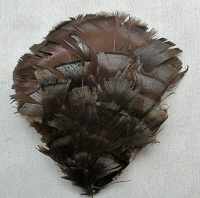 Vintage Millinery Feathers Fan Shape Shades of Brown Color French