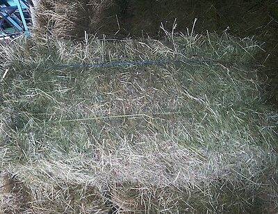 2016 Top Quality Sheep, Cattle, Horse  Small Bale Meadow Hay.
