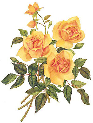 XL BRiGhT YeLLoW RoSeS SHaBbY WaTerSLiDe DeCALs ~FurNiTuRe SiZe~
