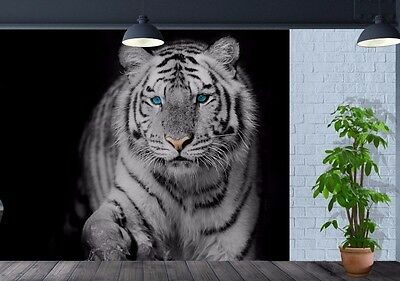 Wallpaper White Tiger Blue Eye stare Nature Wildlife wall mural photo (23965463)