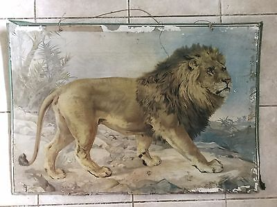 Original vintage zoological pull down school chart of The lion