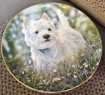 Adorable WEST HIGHLAND TERRIERS - WESTIE - The Bluebell Trail - Paul Boyle PLATE