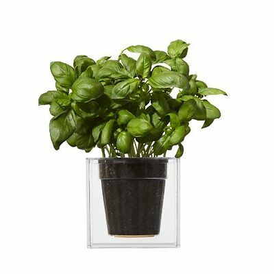 Boskke Cube Clear Planter with Water Reservoir, Large - Clear