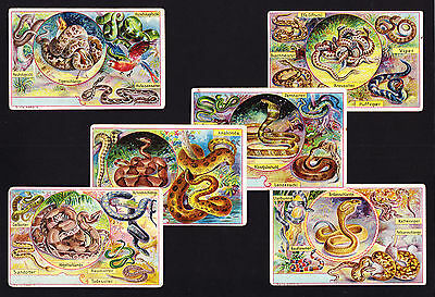 6 Old Trade Cards 7cm X 10.7cm Artist illustrated Snakes Snake Reptiles Viper