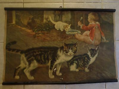 Original vintage zoological pull down school chart Cat , Cats