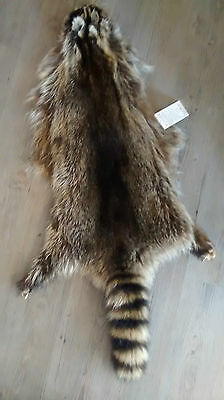 """New Racoon Pelt First Quality Canadian Fur """"bilodeau"""" Mature Size Dense And Soft"""