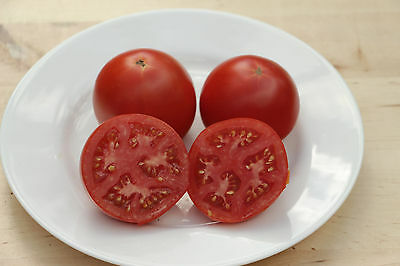 MANITOBA - 50+ Early Heirloom Organic Tomato seeds - Combined Shipping