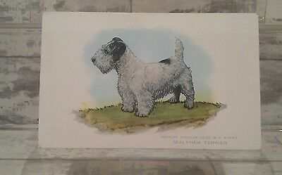 Vintage Rare Sealyham Terrier post card popular dogs in a Africa series