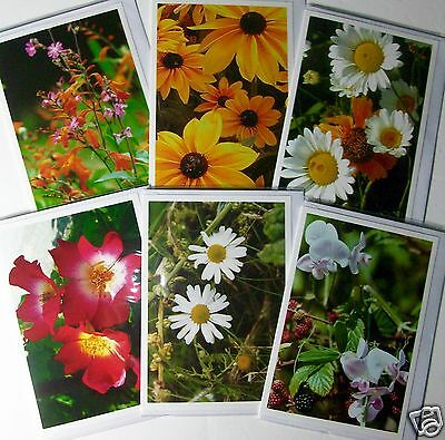 BLANK CARDS, PHOTOGRAPHIC FLORAL, 6 DESIGNS X 6, JUST 26p, WRAPPED (B113
