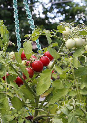DITMARSHER - 30+ Tumbling Tomato Seeds for pots & containers  Organic Heirloom