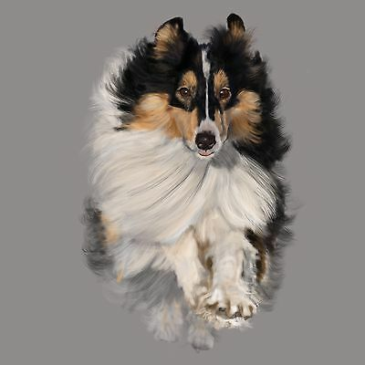 "Print - Sheltie on the Move 12""x 12"""