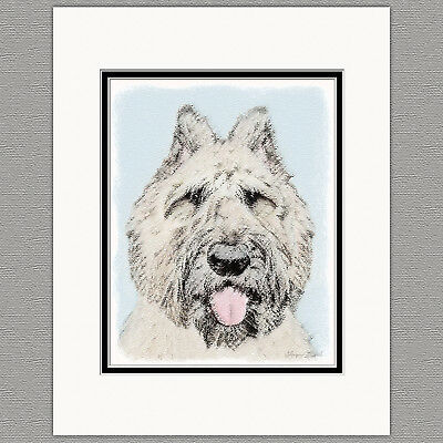 Bouvier des Flandres Dog Original Art Print 8x10 Matted to 11x14