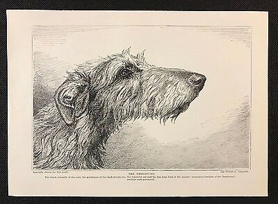 Original 1934 Dog Print / Bookplate - DEERHOUND, Head Study Sketch
