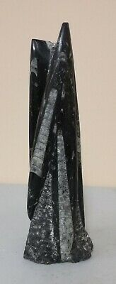 Orthoceras Fossil Tower Sculpture*Cut and Polished*Free Standing*