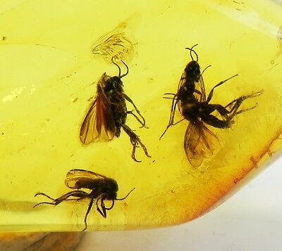 Fossils insects Great 4 Big GNATS inclusions in Genuine Big BALTIC AMBER stone