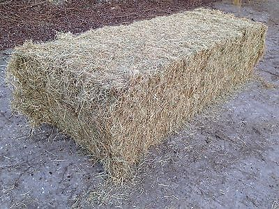 Hay Large 4 string bale ( top quality )
