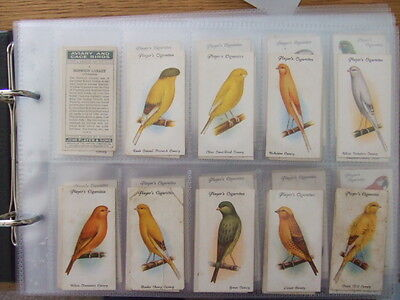 Players Aviary And Cage Birds Complete