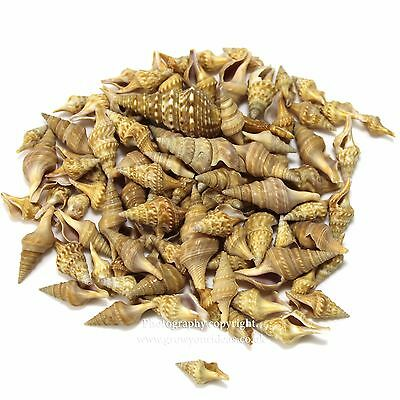 Chinna craft seashells | Perfect for crafts and terrariums | 50g | 80-100 shells