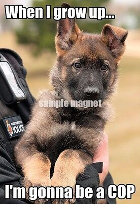 "German Shepherd Refrigerator Magnet  4"" x 2.75"" Gonna Be A Cop"
