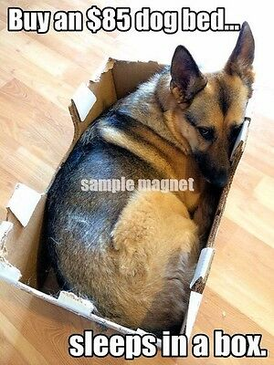 "German Shepherd Refrigerator Magnet 4"" x 3"" Box"