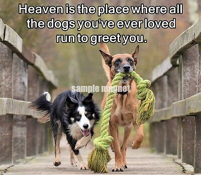 "Border Collie Magnet 4"" x 3.5"" Heaven Is a Place"