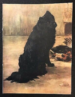 Original 1934 Colour Dog Print / Bookplate - CHOW CHOW, Papoose, Faudel-Phillips