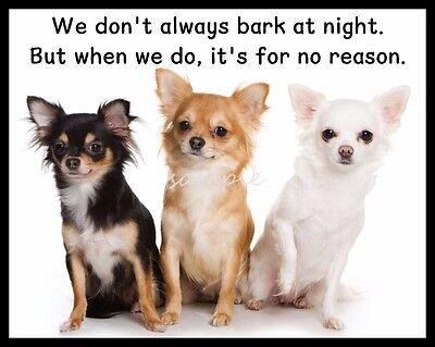 Funny CHIHUAHUAS Bark at Night Refrigerator Magnet 4.75 x 3.75