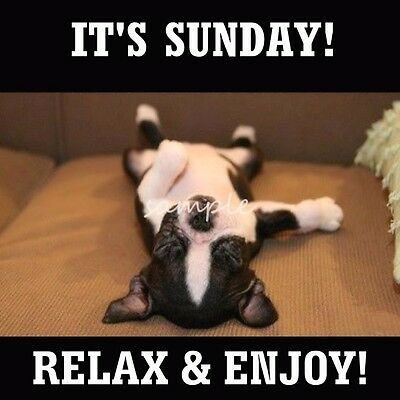 Funny BOSTON TERRIER It's Sunday - Relax  Refrigerator Magnet 4 x 4 inches
