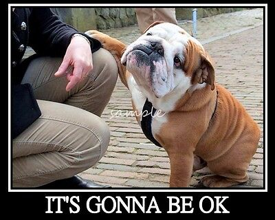 "ENGLISH BULLDOG It's Going to be Ok Refrigerator Magnet 3.75"" x 3"